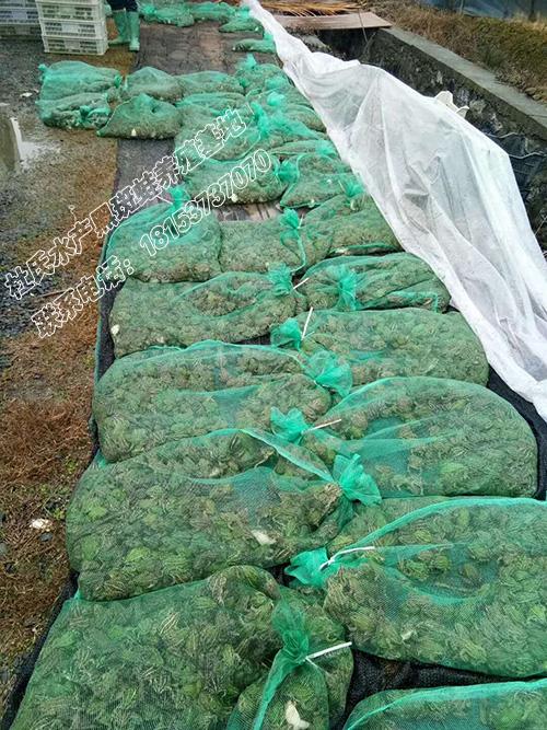 发往浙江杭州的青蛙商品蛙5000斤
