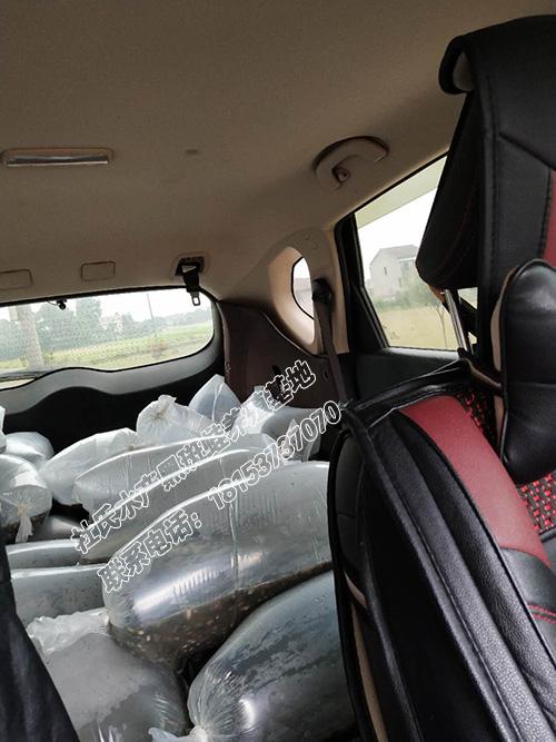 自己开车送货给客户黑斑蛙幼苗,氧气袋运输保证成活率